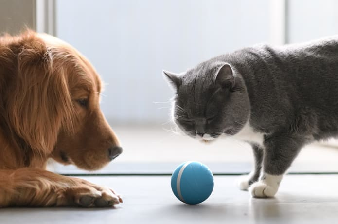 Wicked Ball - Your Pet's Joy when Home Alone | Indiegogo