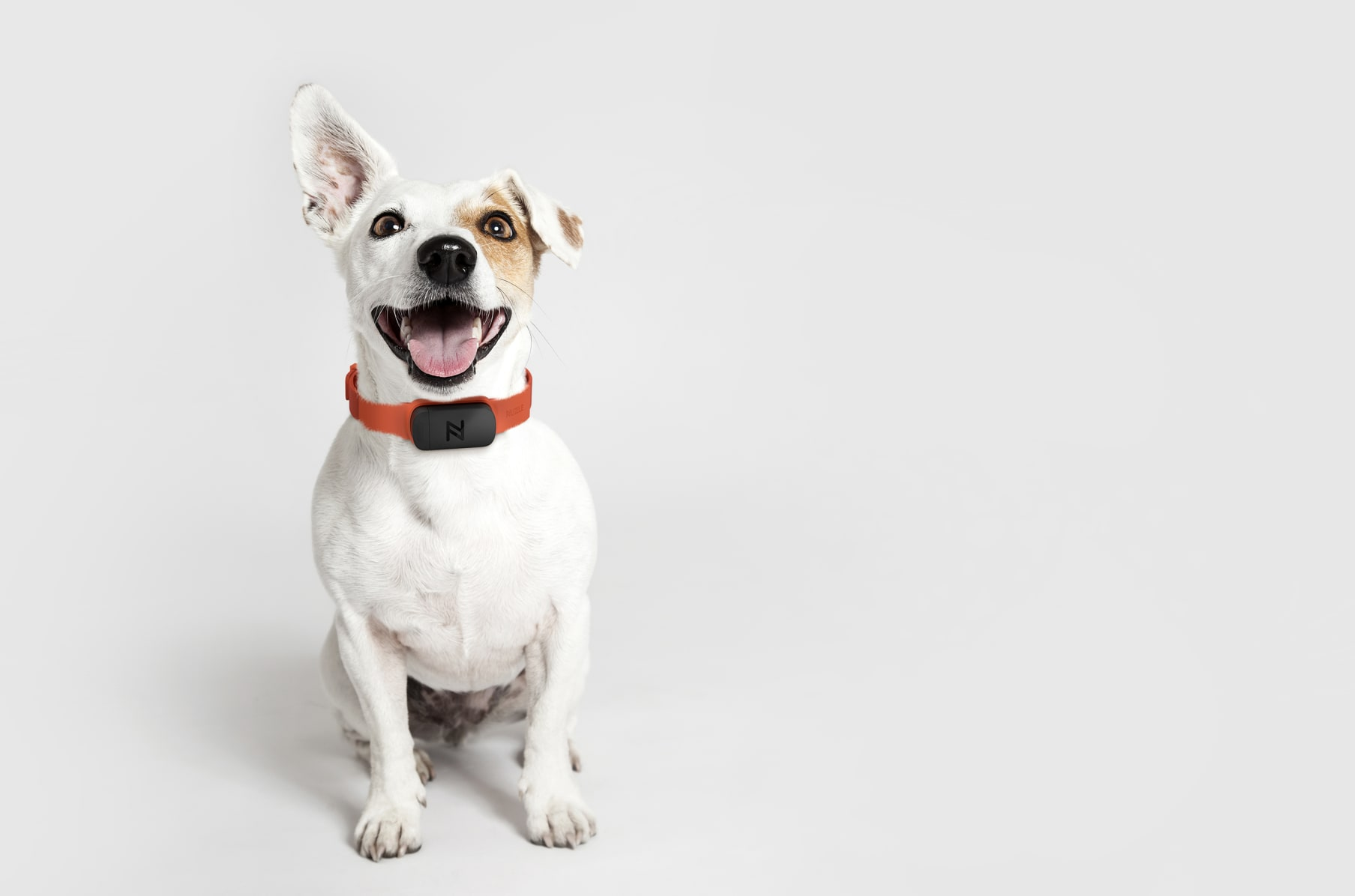 Nuzzle The Smartest Pet Collar With No Fees Indiegogo