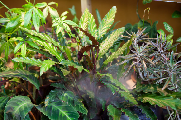 Houseplant Masterclass | Indiegogo